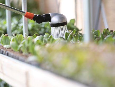 annaffiare le piante