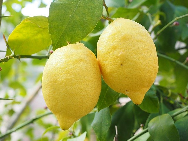 proteggere il limone dal freddo