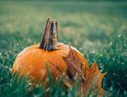 curare il prato in autunno